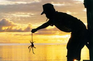 pic-533_el-nido-octopus